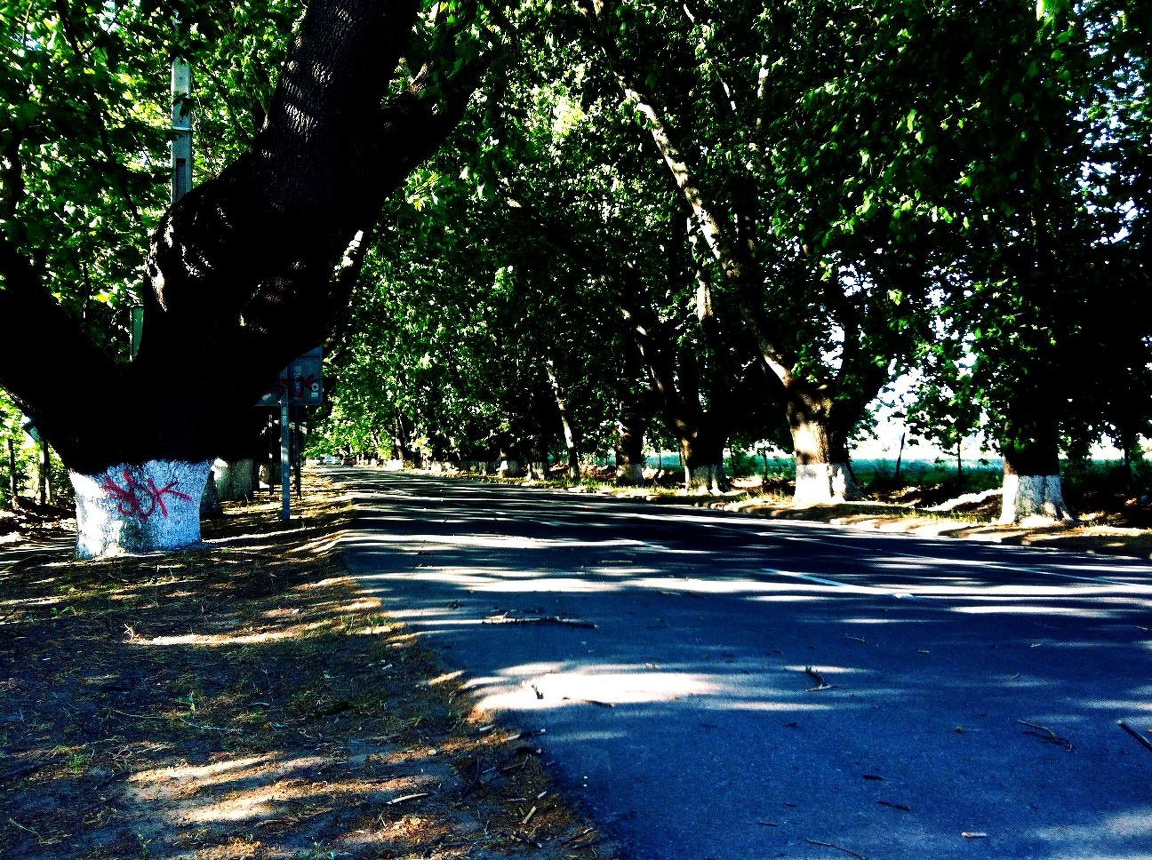 tree, the way forward, transportation, road, diminishing perspective, tree trunk, street, treelined, vanishing point, empty road, empty, road marking, shadow, sunlight, growth, tranquility, asphalt, footpath, nature, country road