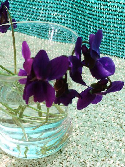 Hello World Montserrat spring is comming