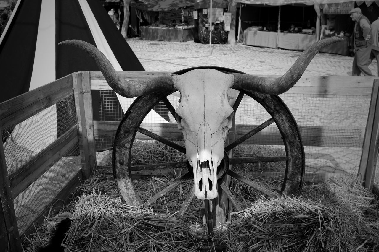 Close-Up Of Animal Head Trophy Mounted On Railing