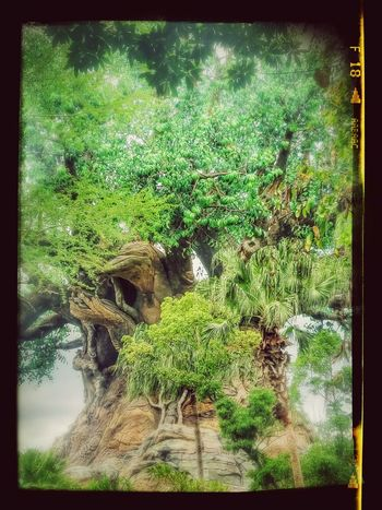 Outdoors Animal Themes No People Growth Nature Day Green Color Tree Plant Water Close-up