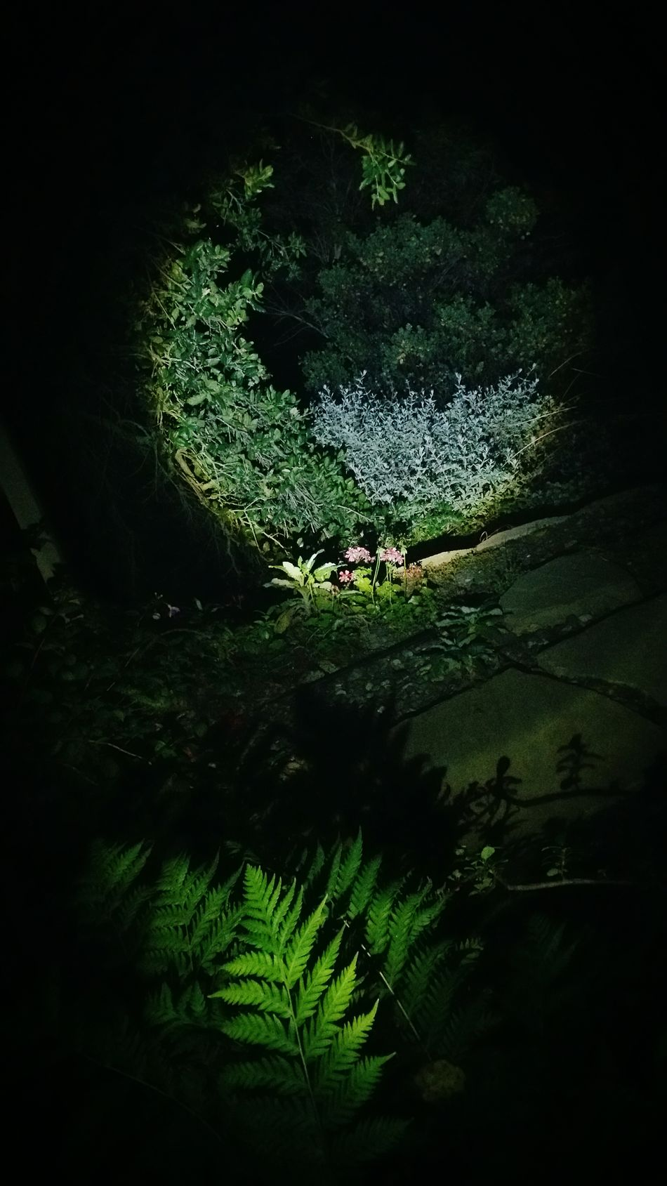 Nightphotography Night Oak Trees Fern Greenery Flashlight Residential Estates EyeEm Best Shots Taking Photos Nature Outdoors Randomshot Minimalism Plant Floorsflowers Overgrown Tree Trunk Enjoying Life