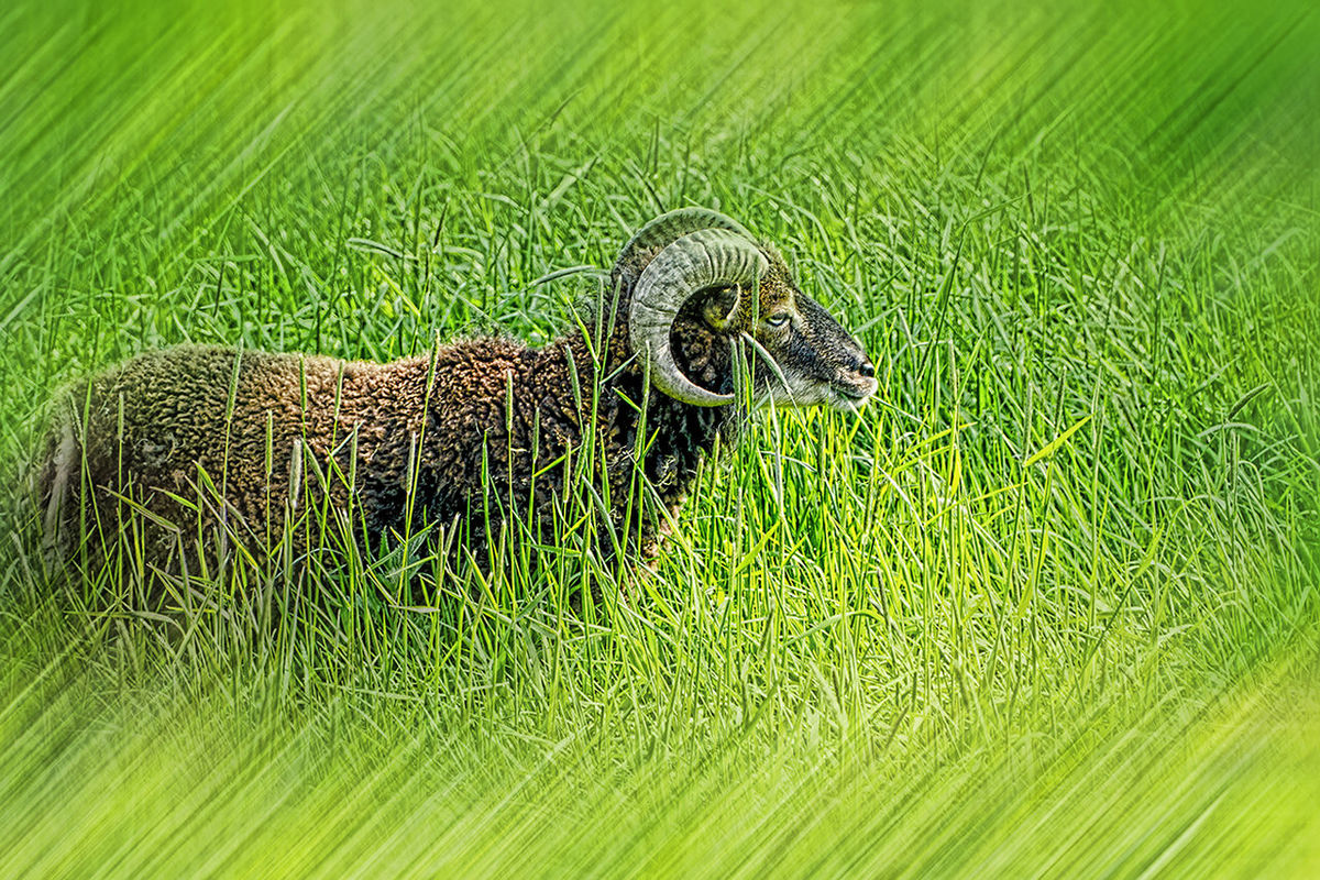 Animal Beauty In Nature Day Focus On Foreground Grass Green Green Color Nature No People Outdoors Portrait Tier Widder