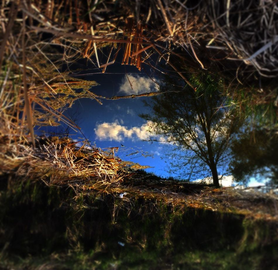 http://youtu.be/GZNtticFI60 We Own The Light EyeEm Music Lover Quietude Landscape_Collection Darkness And Light Texas Panhandle EyeEm Nature Lover In Living Color Texas Landscape Showcase March Naturelovers Eye4photography  EyeEm Tadaa Community Mood And Music Down In The Valley Tree Sunday_flip Treehugging Reflection