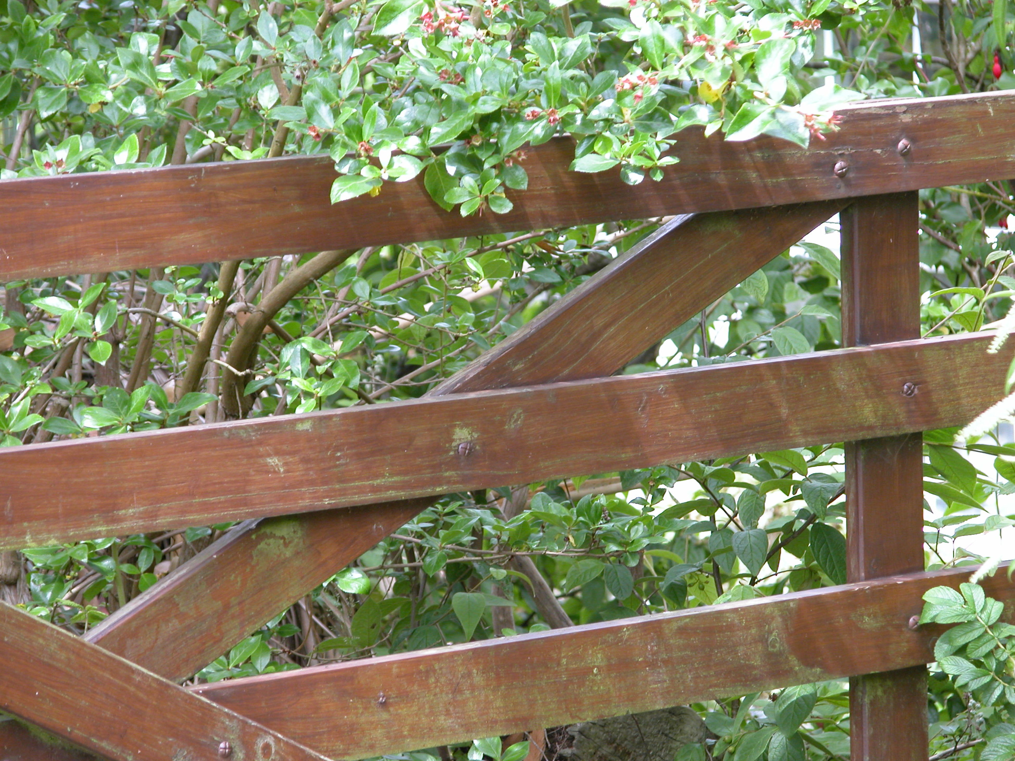 wood - material, wooden, tree, wood, railing, fence, growth, plank, green color, nature, plant, day, footbridge, no people, outdoors, branch, park - man made space, built structure, sunlight, close-up