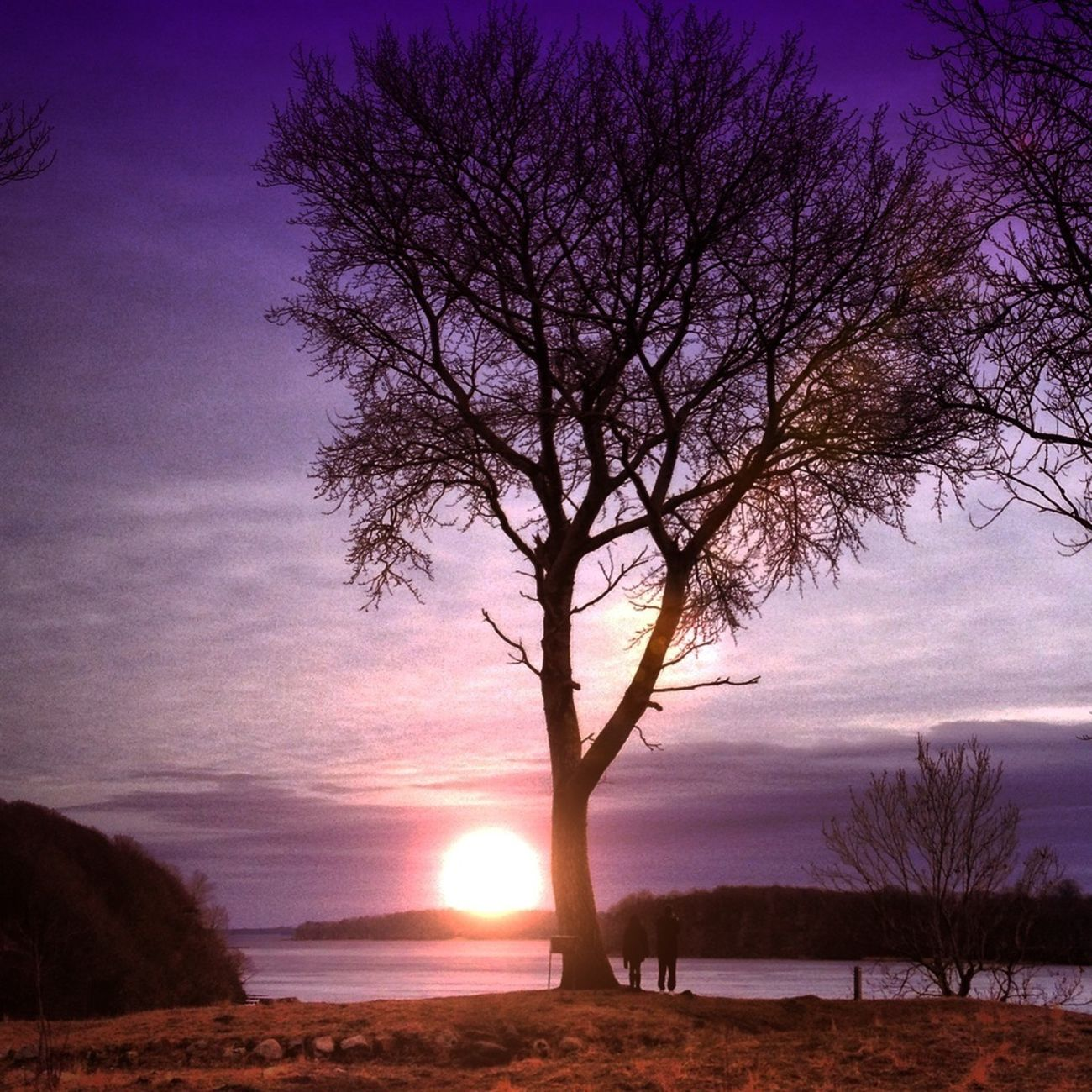 Eye4photography  Trees