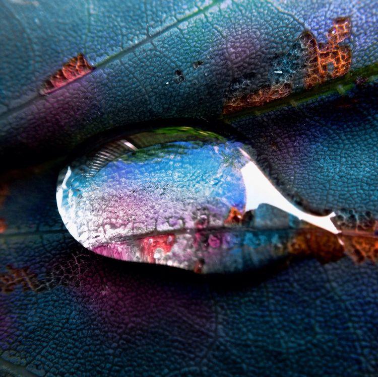Glycerol in leaf. iPhone 5 and Olloclip macro. Macro Eye Em Nature Lover Glycerol Water Drop
