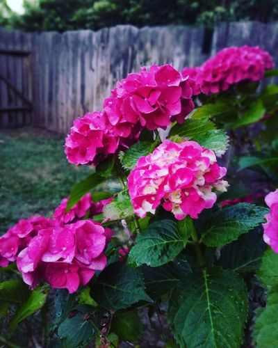 Rustic Charm Rustic Beauty Peaceful Flowers, Nature And Beauty Pink Flowers Wood