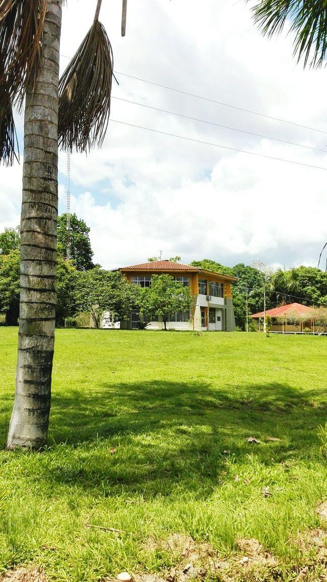 En el Instituto de la Amazonia Peruana :3