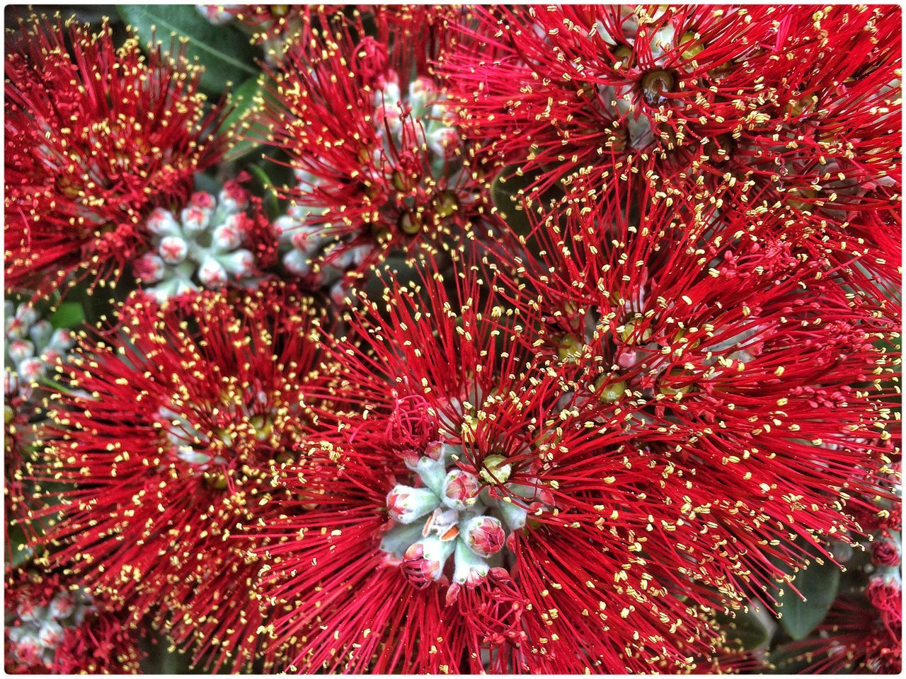 red, no people, full frame, growth, flower, flower head, day, nature, freshness, close-up, fragility, outdoors, undersea