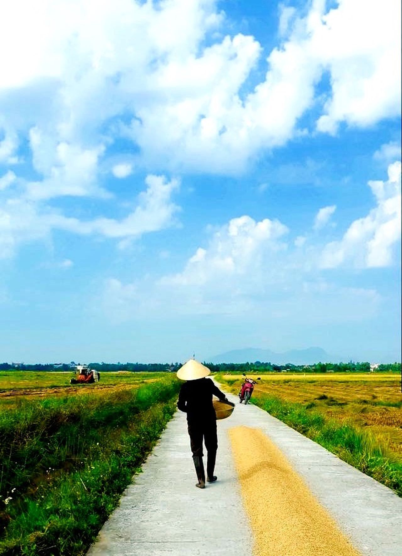 Re Edited Edited Rice Field Rice Paddy Ricefield Sunshine Drying Making A Living Conical Hat Hat Sun Sunny Sunny Day Working Working Hard Hard Work Harvesting Harvest Scene Rural Rural Scene Hoi An Vietnam Showcase April Up Close Street Photography