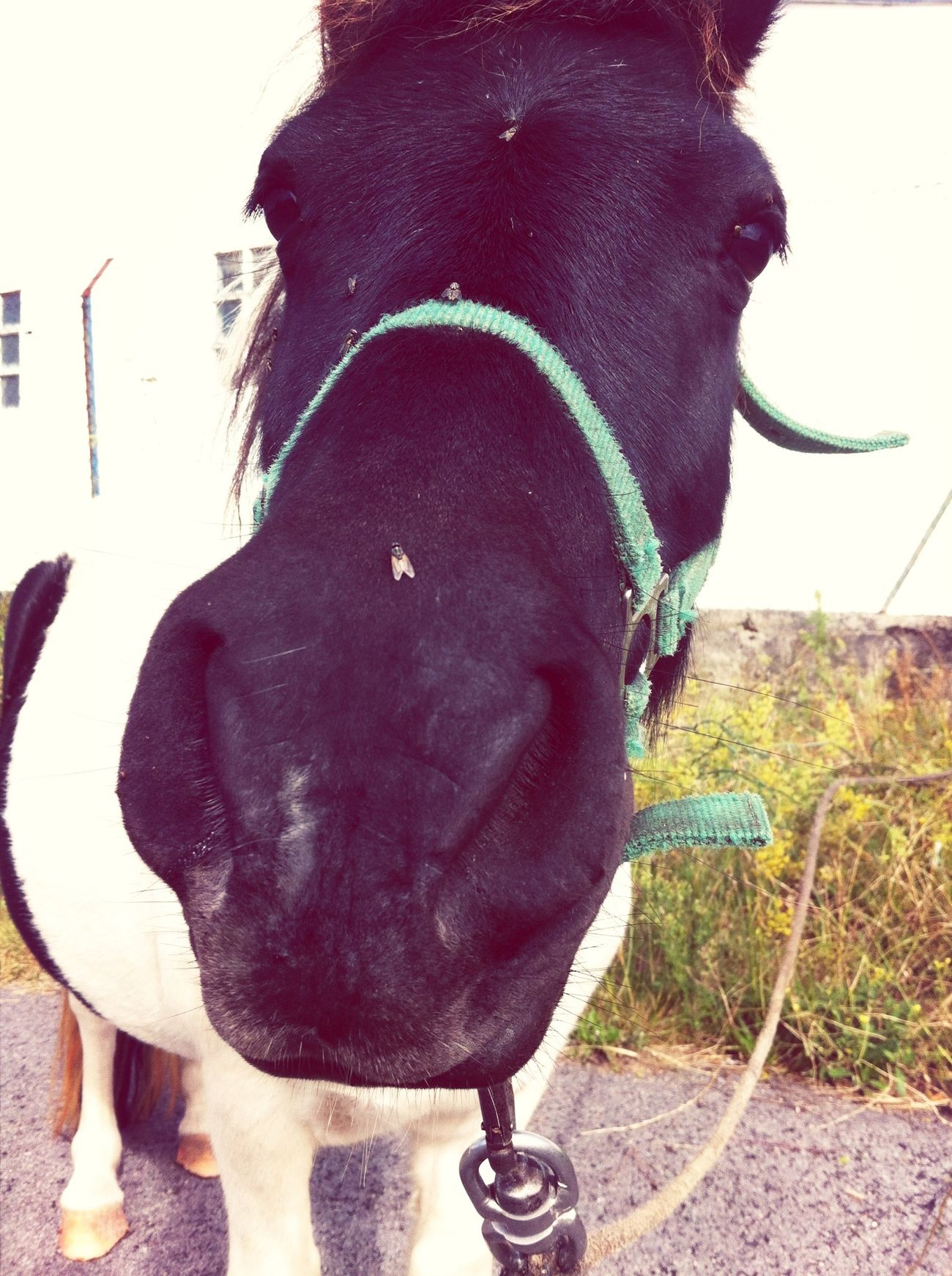 Had a chat with this lovely pony yesterday.