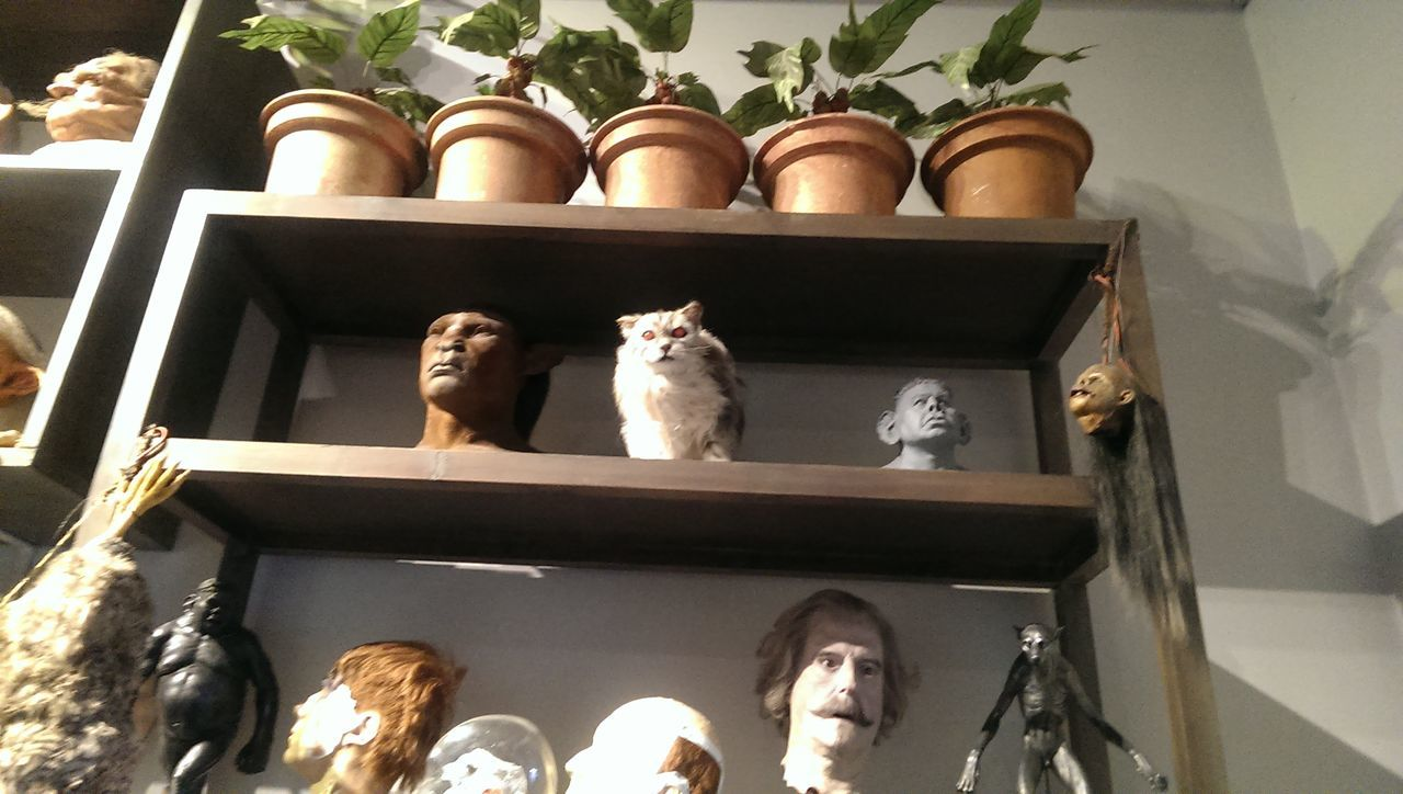 human representation, statue, indoors, sculpture, shelf, mammal, no people, domestic animals, day, architecture