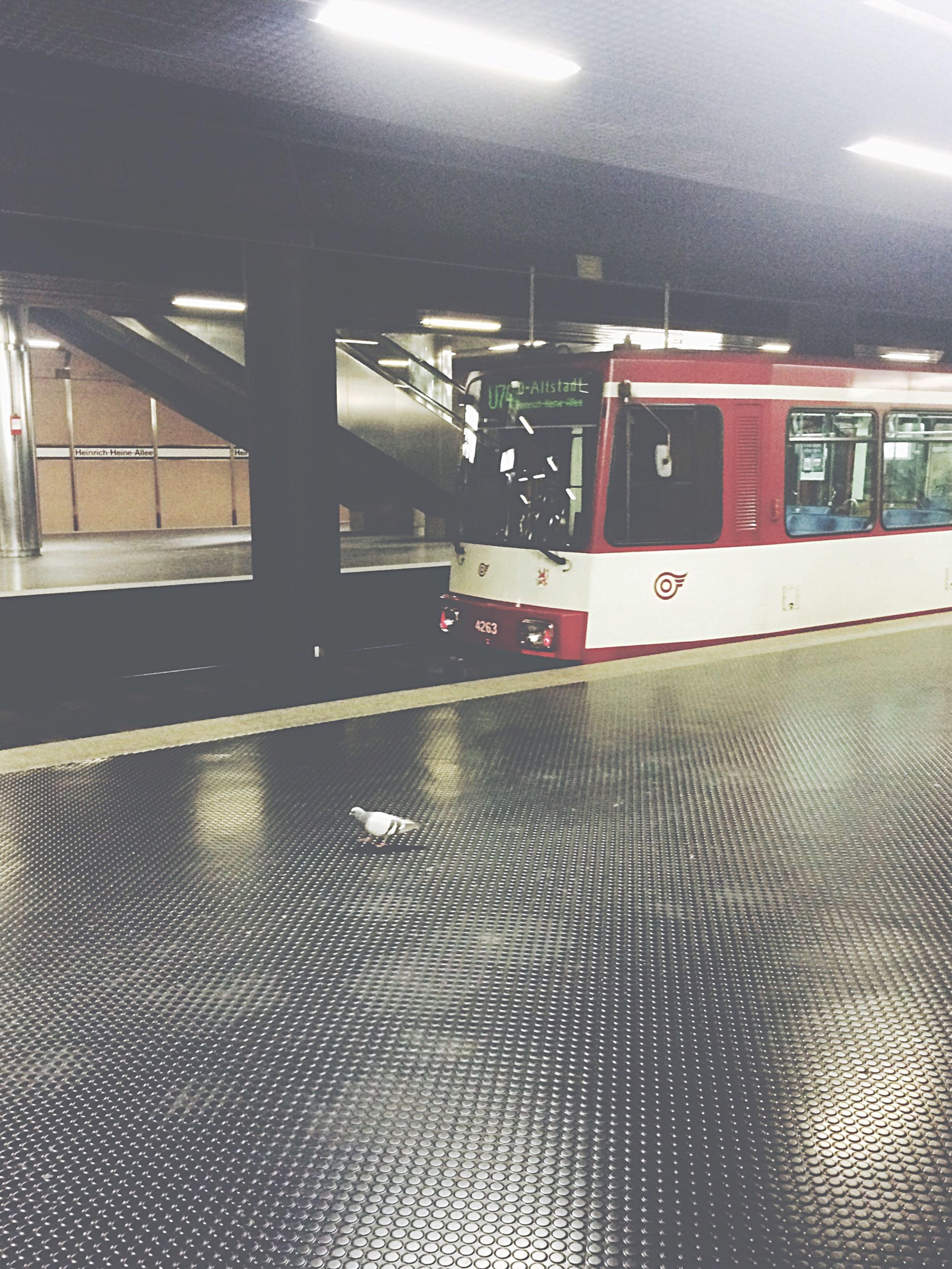 Mostrandomtonight Pigeons Urnevergonnagetout Idiot Train Staubsaugen