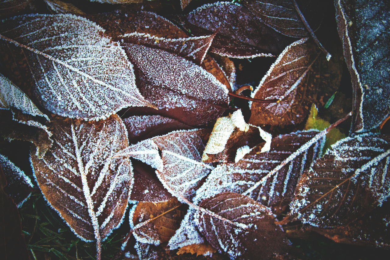 leaf, nature, no people, close-up, plant, day, winter, outdoors, cold temperature, fragility, beauty in nature, snow