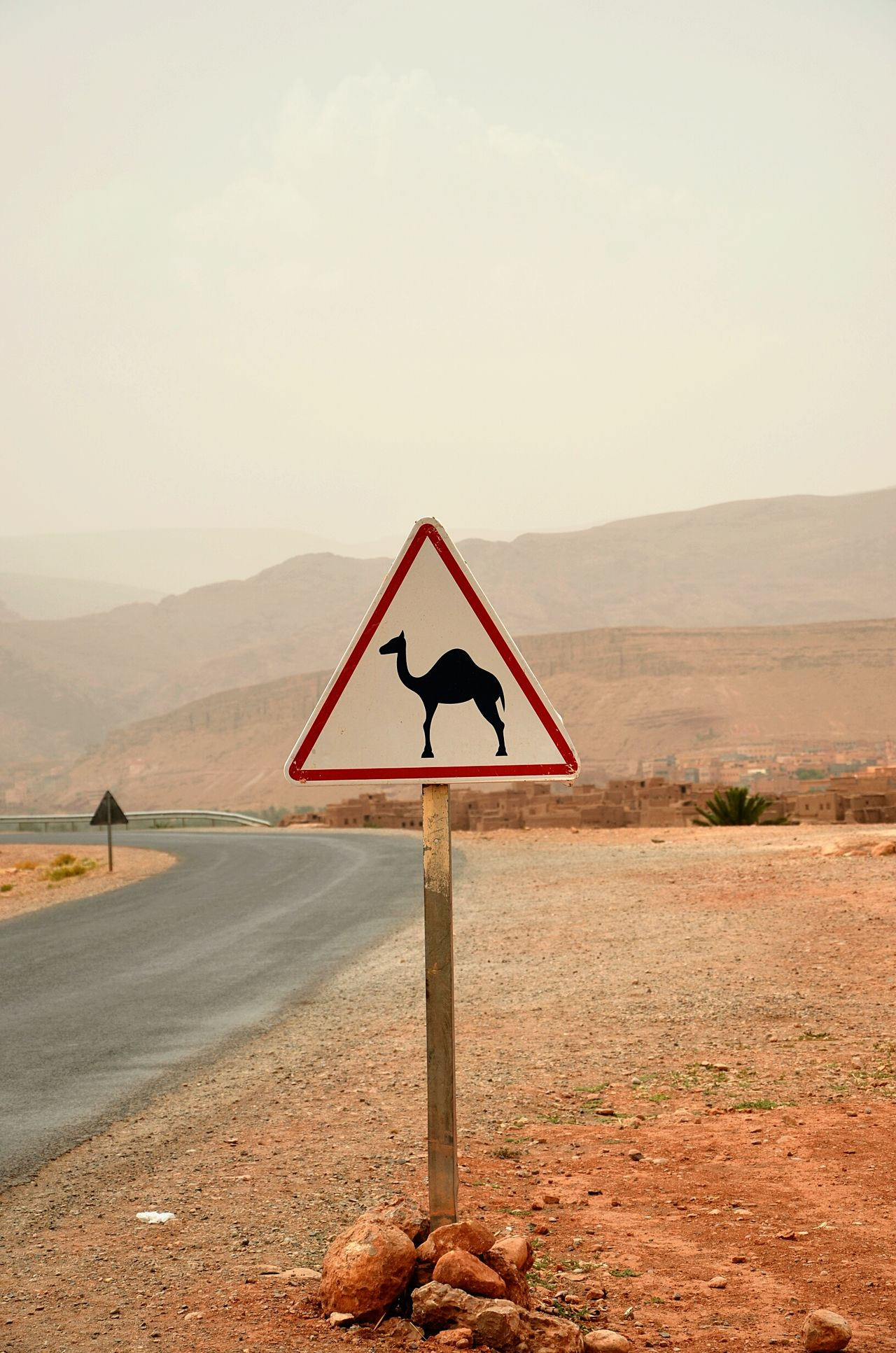 Beautiful stock photos of camel, Animal Representation, Black Color, Camel, Camel Crossing Sign