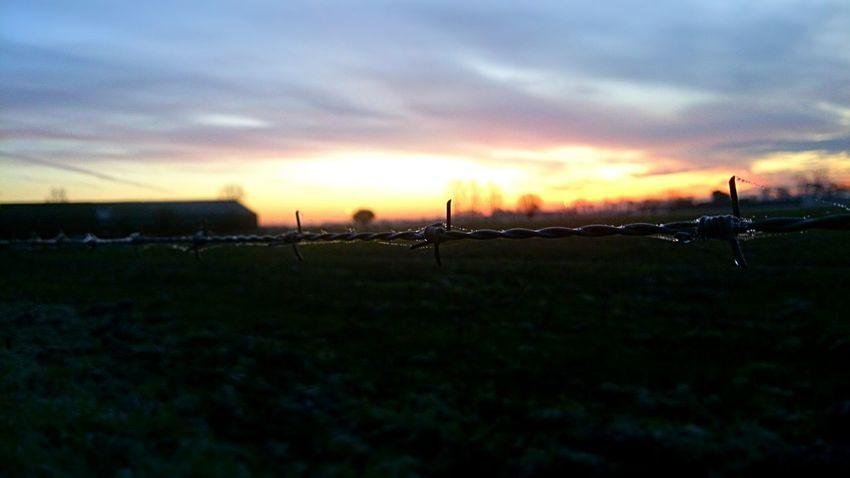 Sunrise Dew Close Up Streetphotography