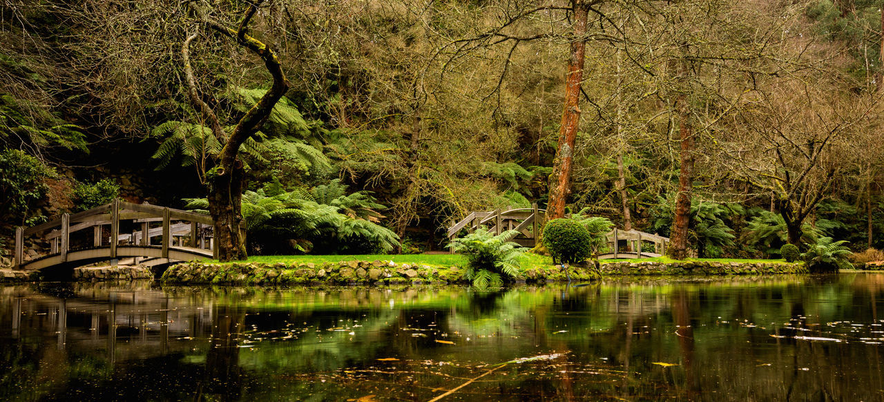 Botanical Gardens Framed Peace Beauty In Nature Botany Branch Day Forest Garden Growth Lake Landscape Nature No People Outdoors Reflection Scenics Tranquil Scene Tranquility Tree Water Waterfront