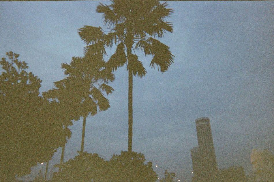 Tropical Night. Photography Travel Film Kodakfunsaver Singapore Cityscapes Night