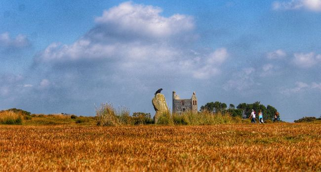 The Hurlers Enjoying The Sun United Kingdom England Standing Stones Cornwall Birds Crows 43 Golden Moments