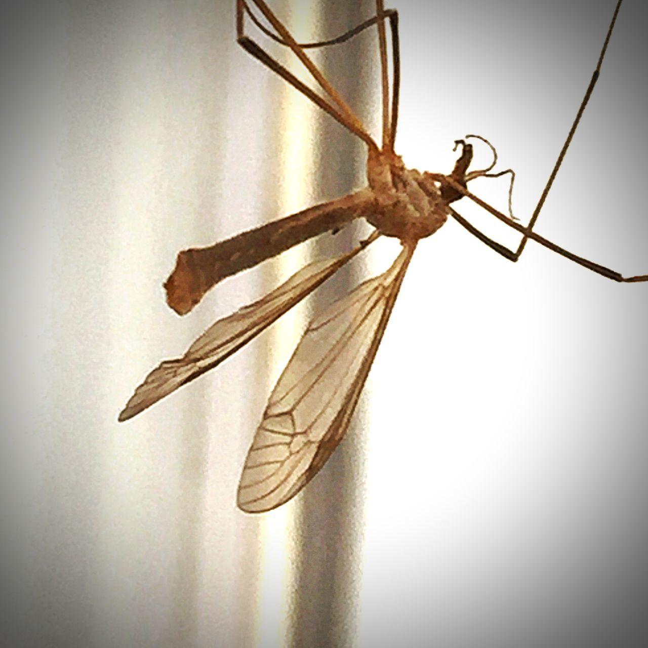 Spider bait
