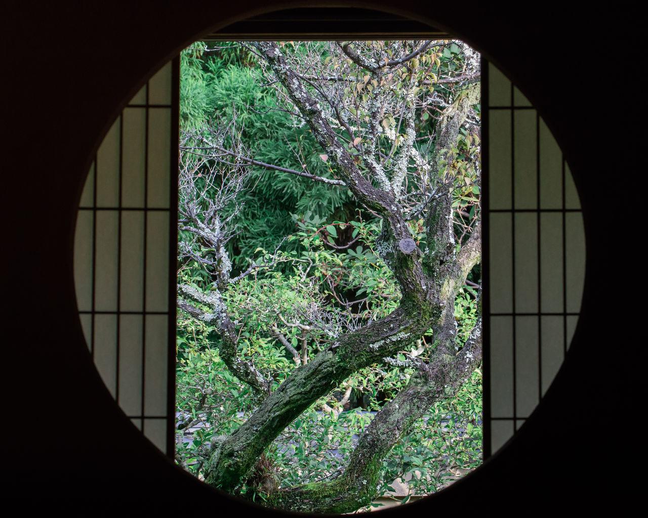 Architecture Calm Culture Day Garden Indoors  Japanese  Nature No People Plant Silence Summer Tree Tree Window Zen Zen Garden
