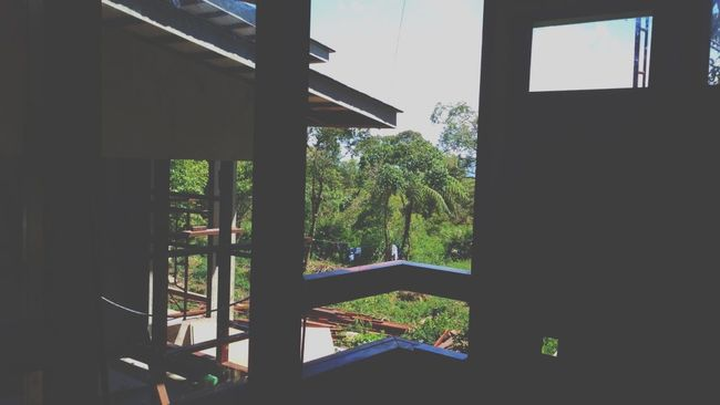 Nature Nature_collection EyeEm Nature Lover Green Trees House Sillouette Throwback Sunny Hanging Out