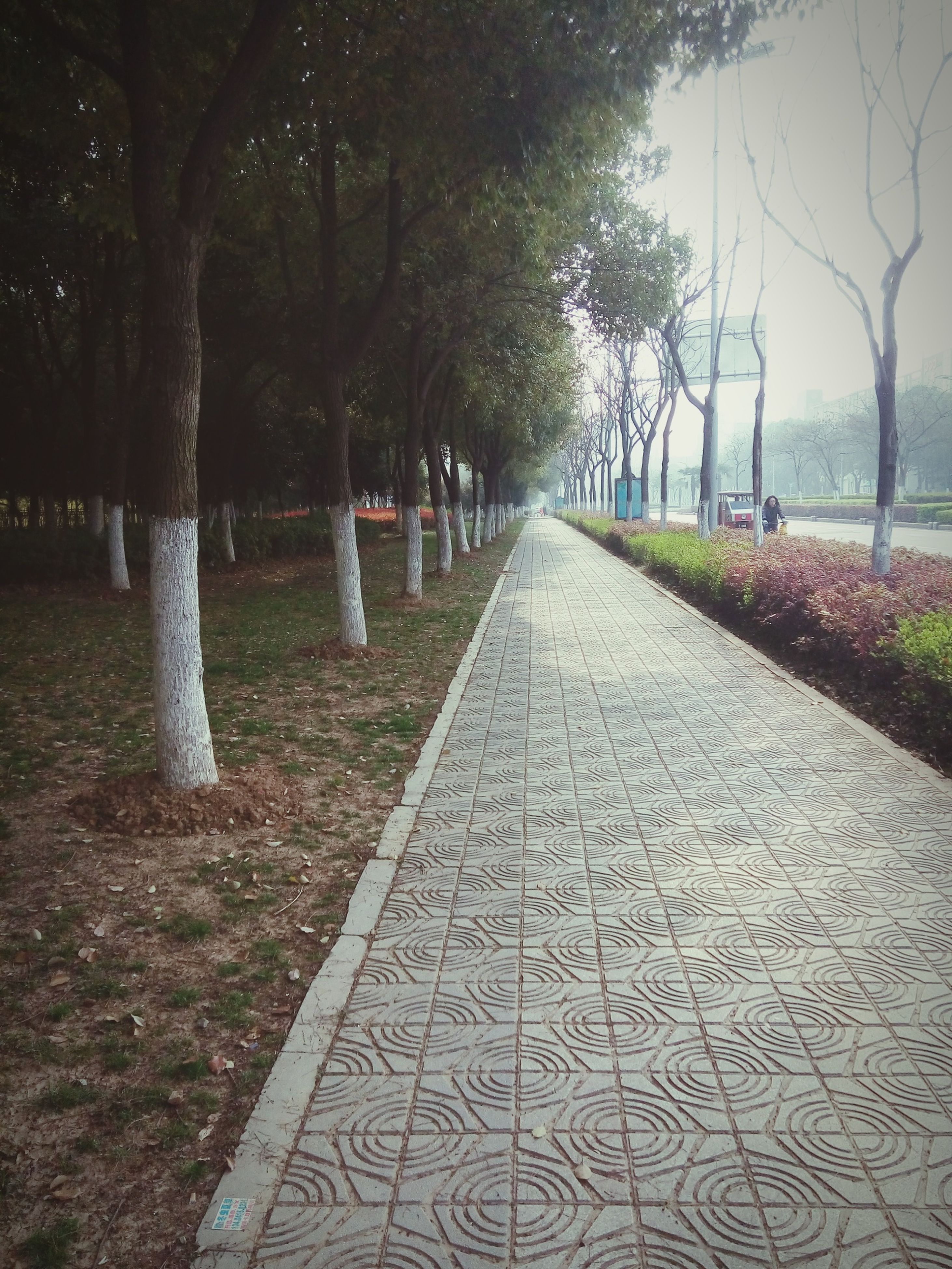 tree, the way forward, diminishing perspective, vanishing point, treelined, footpath, tranquility, park - man made space, nature, growth, tree trunk, tranquil scene, transportation, bare tree, walkway, sunlight, road, shadow, pathway, outdoors