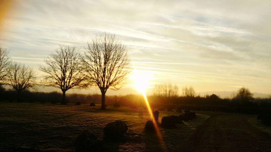 Il y a des matins où le cœur et le regard s'émerveillent..... Sunset Nature Sunlight Beauty In Nature Sun Rural Scene Landscape Sky Cloud - Sky Naturemakesmehappy