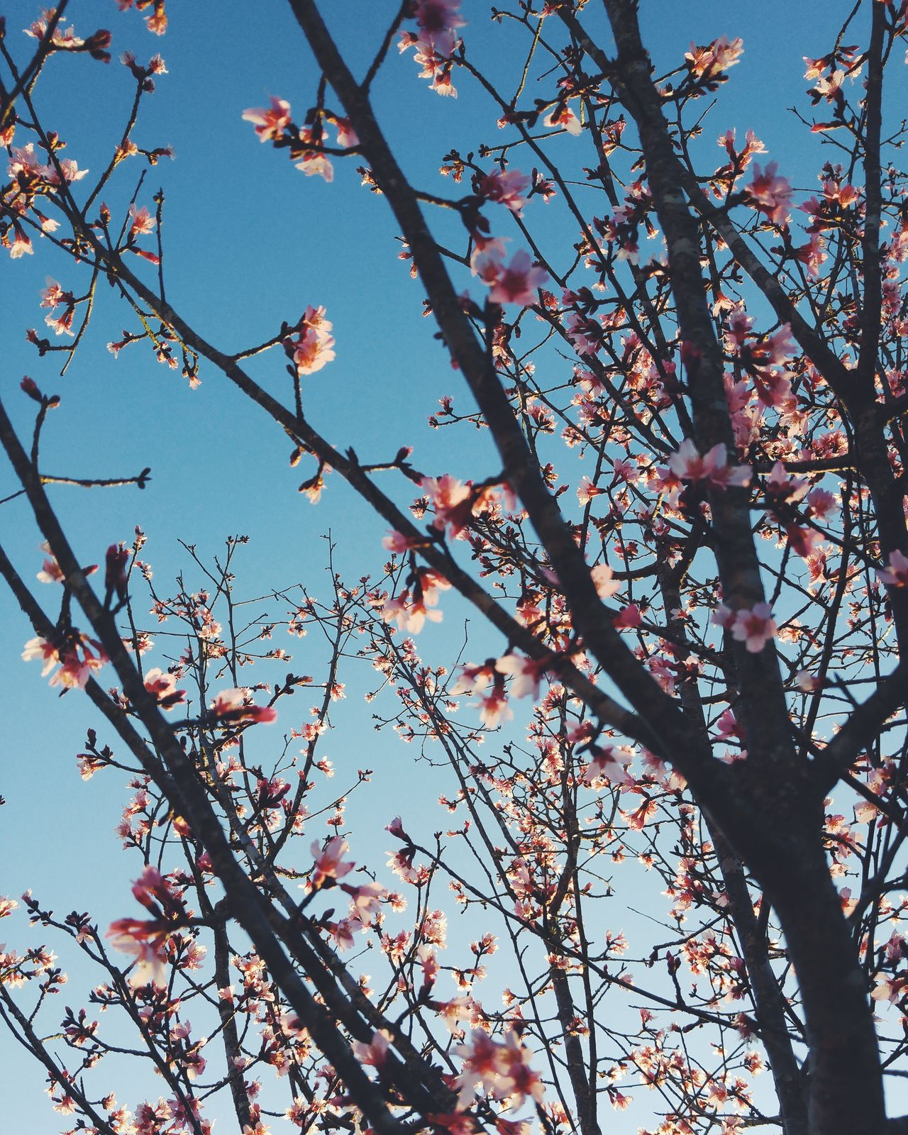Spring is right around the corner, y'all Hanging Out Student Taking Photos Vscocam VSCO Lookingup Spring Springtime Spring Flowers Pretty This Week On Eyeem Nature Nature_collection Nature Photography Colorful