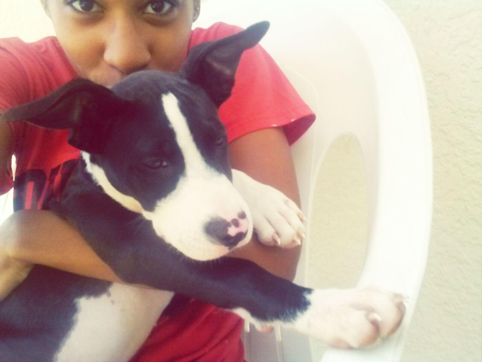 Diesel!! Babypitbull Alpha Pitbull PuppyLove