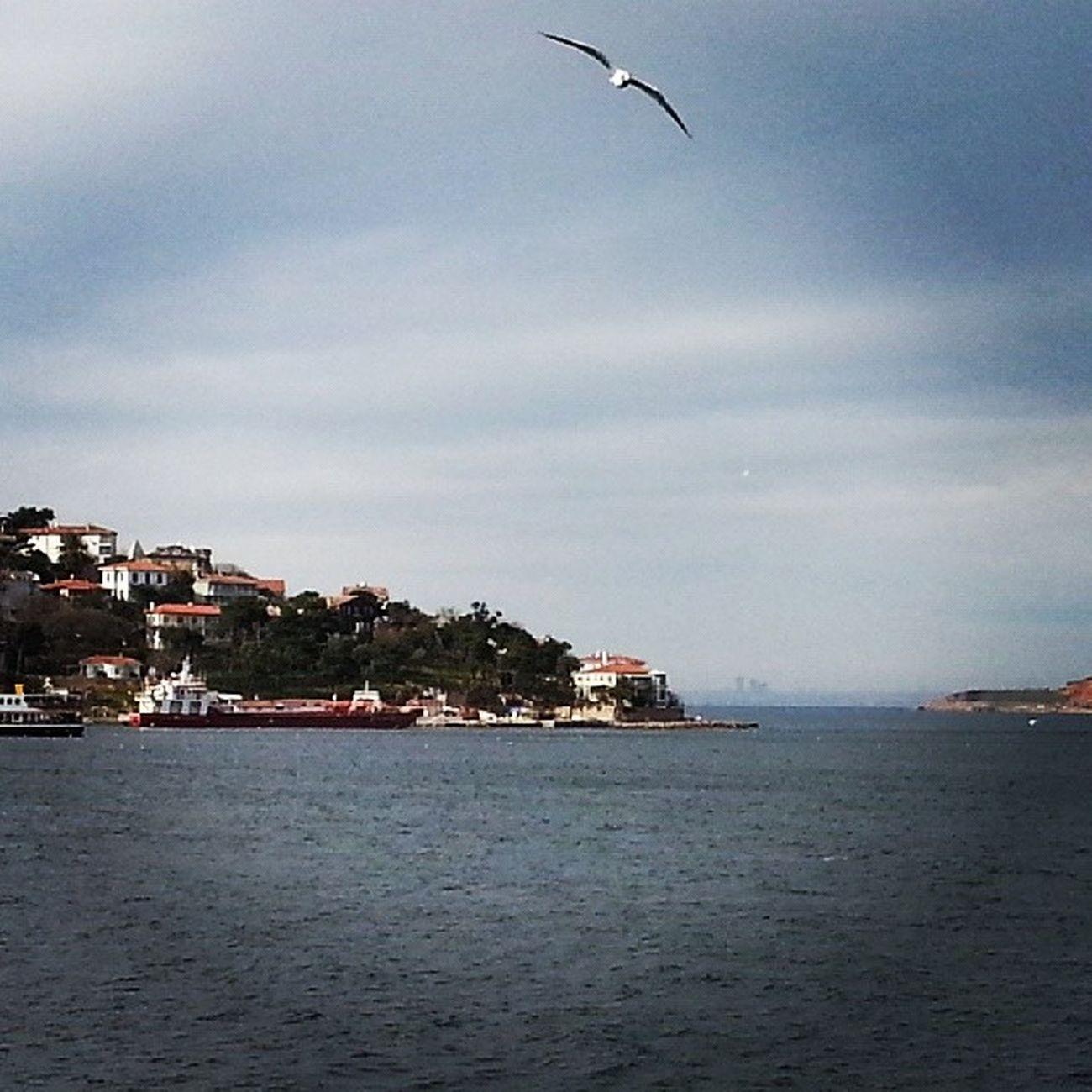 Istanbul Picofday Boğaz Bosphorus Winter Büyükada Princeislands Island Vapur
