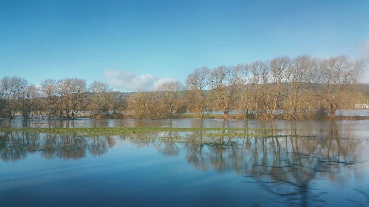 Flooded. .. Trees Reflection Reflections Water Flood Flooding River Severn Hafren Wales Winter Meadow Fields Valley река деревья паводок