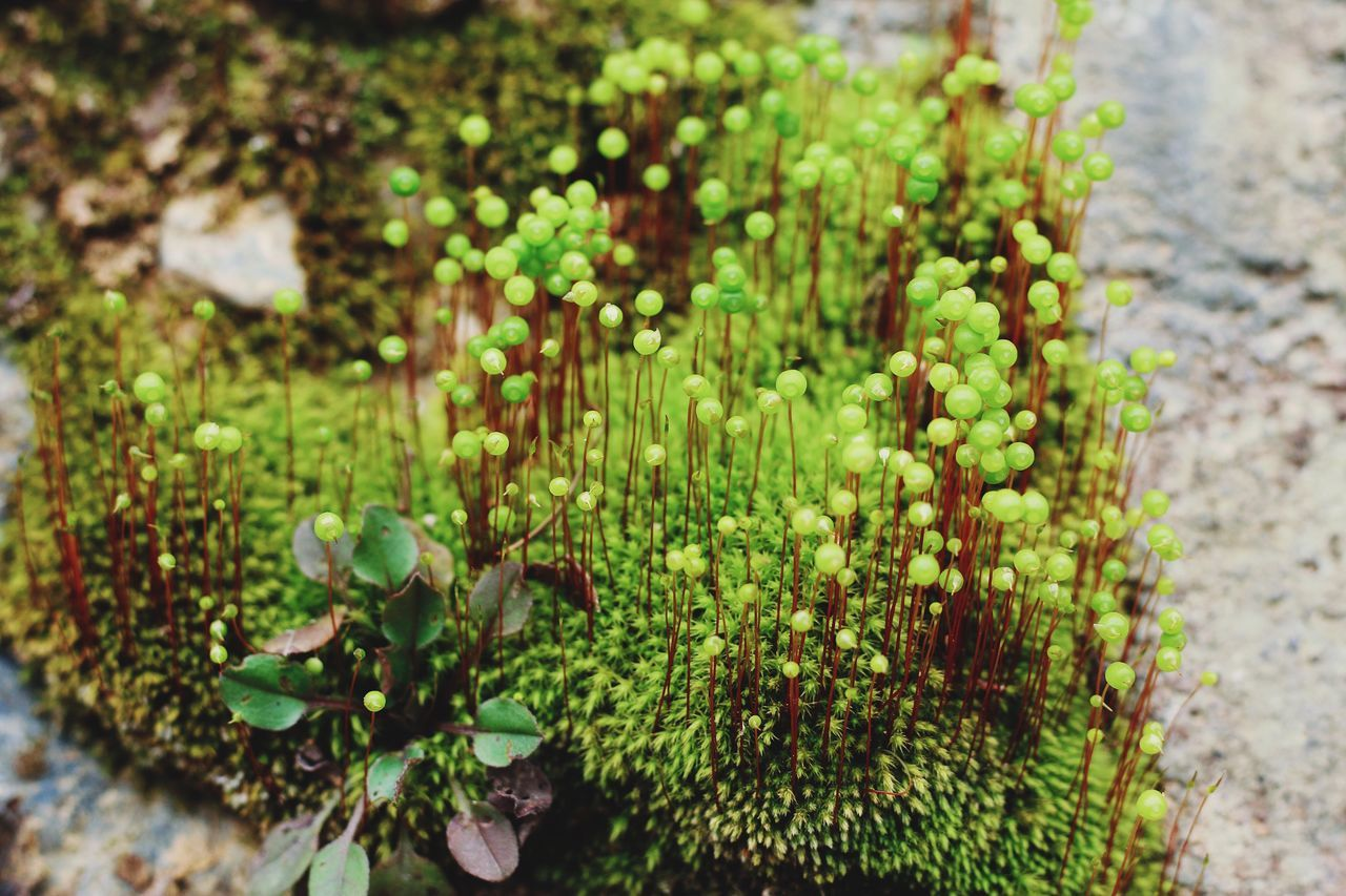 EyeEmNewHere Macro Macro Photography Macro_collection Macro Beauty Macro Nature Green Color Green Spring Springtime Plant Moss Mossporn Macroporn Growth Nature Green Color Beauty In Nature No People Outdoors Close-up Freshness Fragility From My Point Of View EyeEm Gallery
