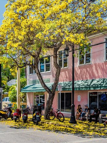 Keep calm and love Yellow! #art #beautiful #beauty #florida #keywest #leaves #life #merica  #Nature  #niceview #Shadow #street #streetphotographer #town #townscape #travel #traveller #tree #trip #Usa #yellow City Life Nature Plant Travel