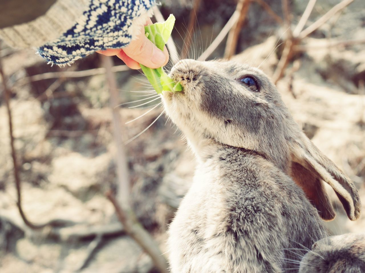 Beautiful Nature Beautiful Nature_collection Pretty Nature Japanese  Outdoors Cute Nature Photography Animal Photography Island Animal Wildlife Animals Animal Animals In The Wild Rabbit ❤️ Rabbits Rabbit Animal Themes