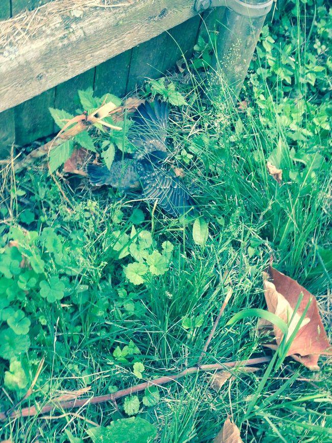 Injured Bird Bird In Grass Animal Camouflage Bird Nature