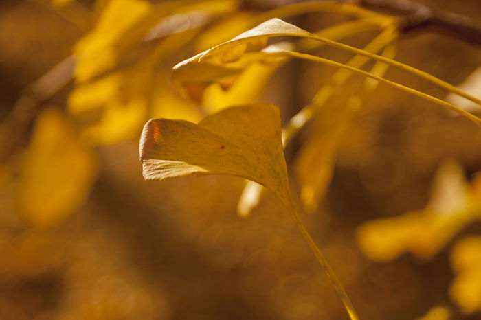 Beauty In Nature Close-up Freshness Growth Nature No People Outdoors Plant Yellow