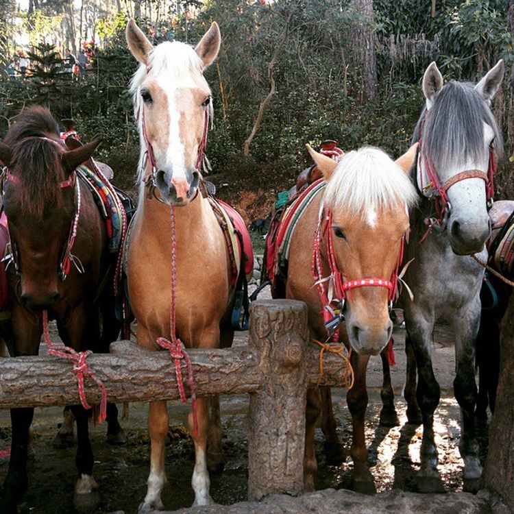 @ Wright Park 🐎 Baguiocity Unfiltered Summer Horses Wrightpark Animals Animal Photography Nexus5photography Horse Ponies