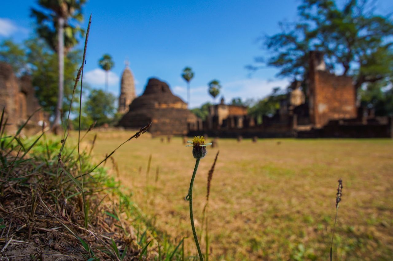 Flower Architecture Building Exterior Close-up Day Flower Grass Growth Historic Historical Place Nature No People Outdoors Plant Sky Small Flowers Sukhothai Sukhothaihistoricalpark Temple Tree