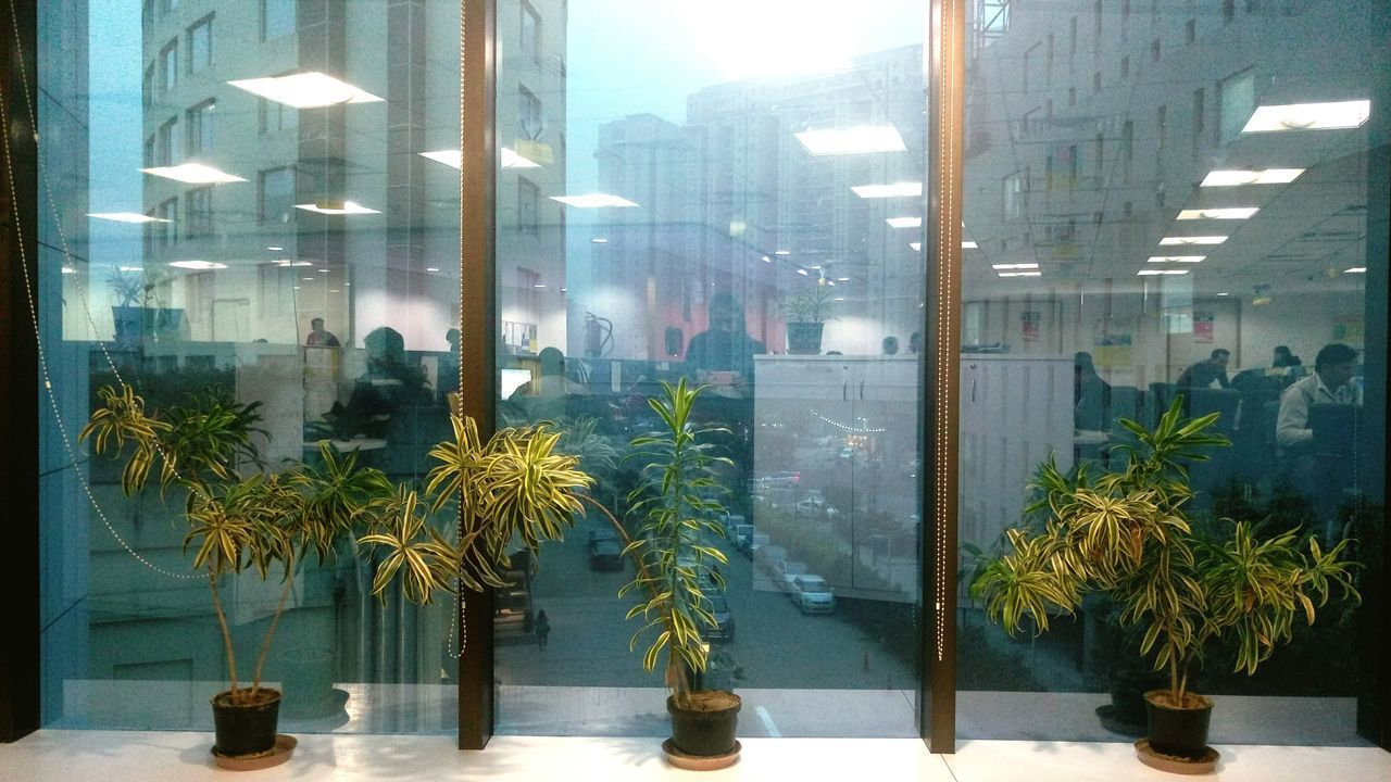 Window Business Finance And Industry Tree Store Architecture City Day Building Exterior Built Structure Outdoors Cityscape Plants Traffic Dawn Dawnsky Dawntime Dawn To Dusk Mirror Effect Mirroreffect Mirror Reflection Glass Reflection Lights And Shadows Office Block Office Reflections