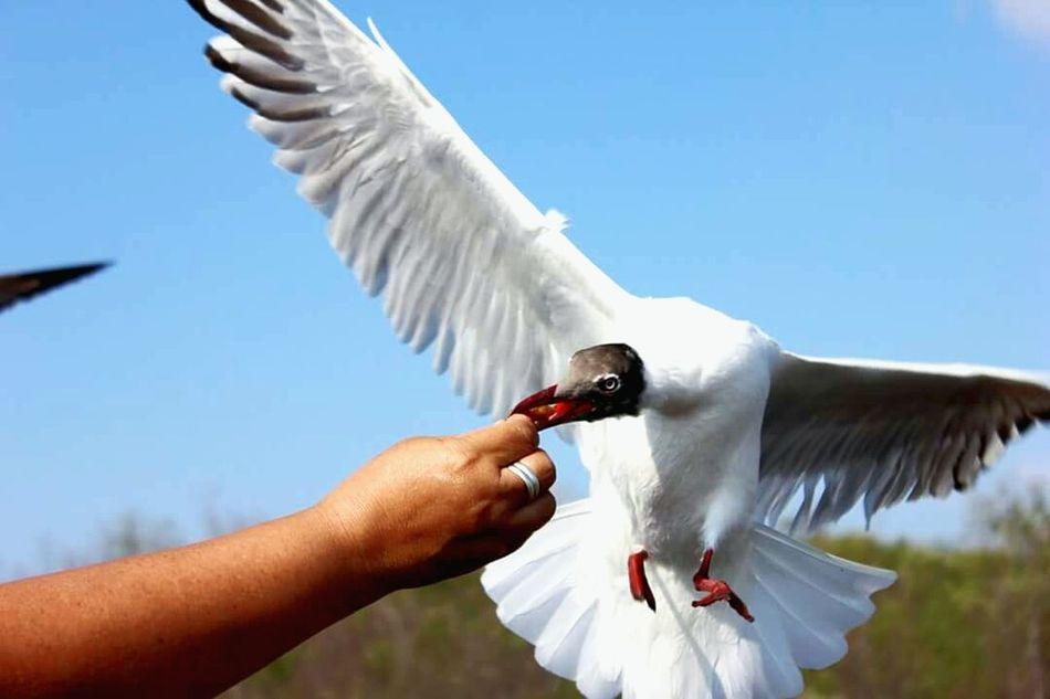 Give feed for bird Feeding Birds Travel Holiday Trip Canon Canon600D Photography Bird Photography Animal