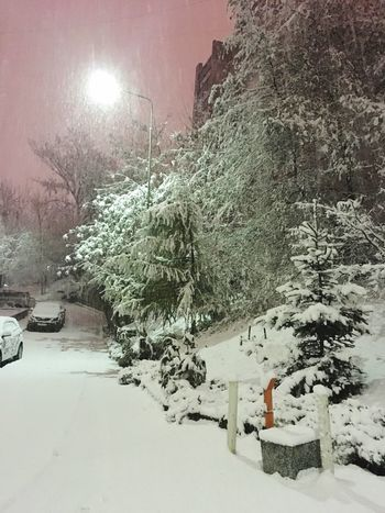 Snow Cold Temperature Weather Tree Nature Covering Beauty In Nature No People Outdoors Car Beauty
