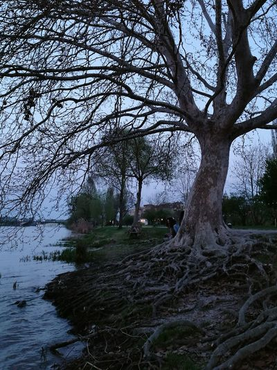 Baum Albero Radice Tranquility Beauty In Nature Tranquil Scene No People Water Nature Outdoors Landscape Scenics Lake Mantova