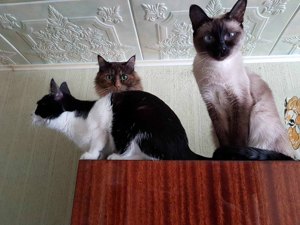 Portrait Of Cats Sitting