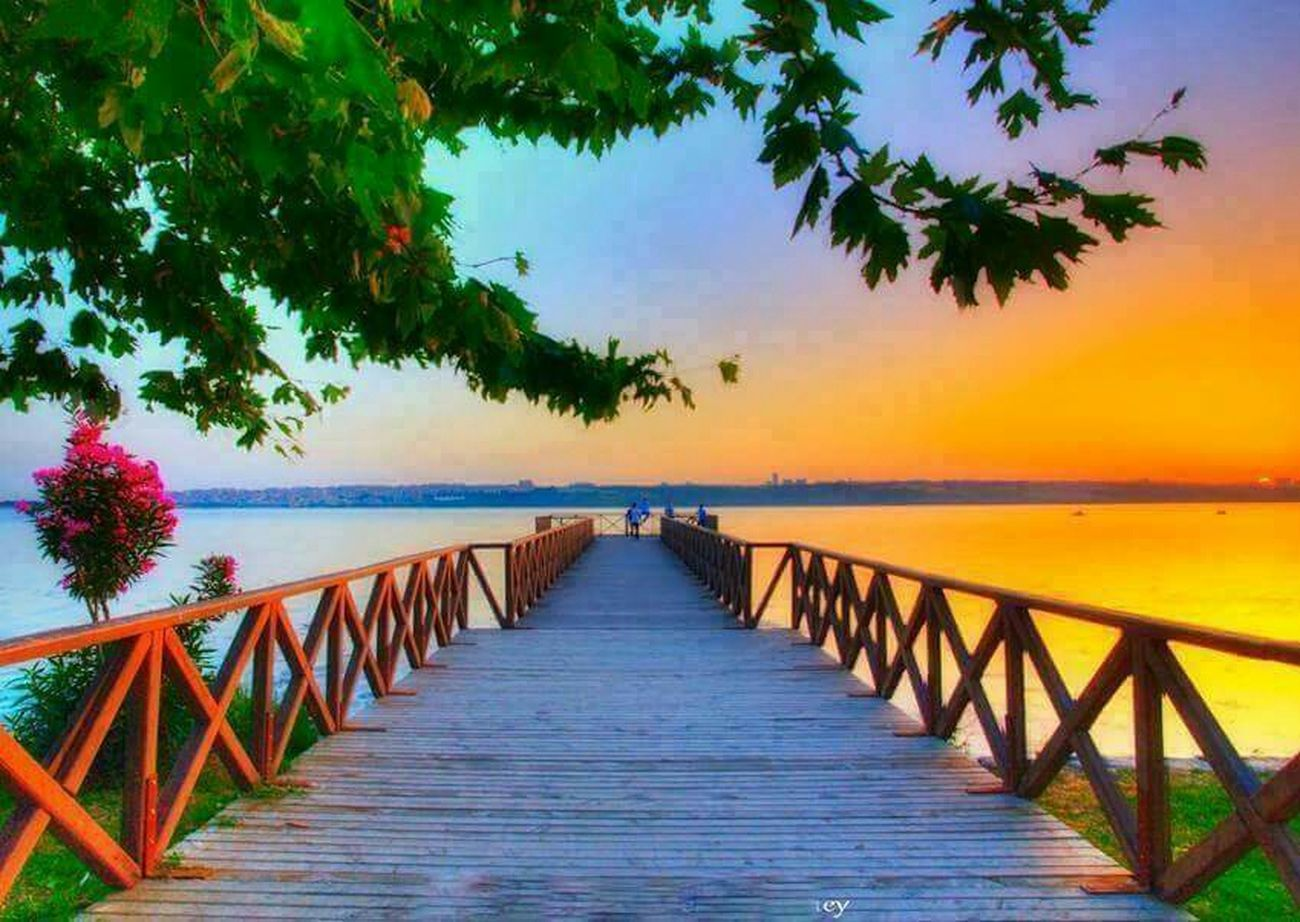 Dock Leaves Water Sunset Pictureoftheday Nature Flower PicturePerfect Every Picture Tells A Story