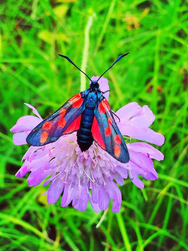 Insect Insecte Papillon Nature ON EyeEm EyeEm Nature Lover Nature Printemps Fleur Flower