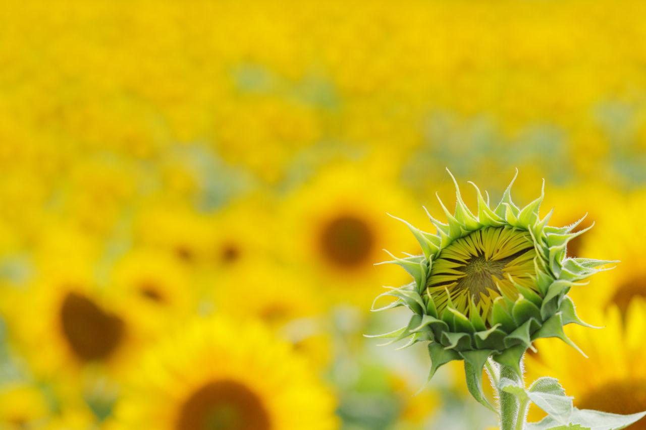 EyeEm Nature Lover 季節外れさーせん フィルターかけると迷うからスッピン コメント遅れ気味 月曜日強い EyeEm Flowerporn Simplicity 連投の予感 え The Moment - 2015 EyeEm Awards My Best Photo 2015