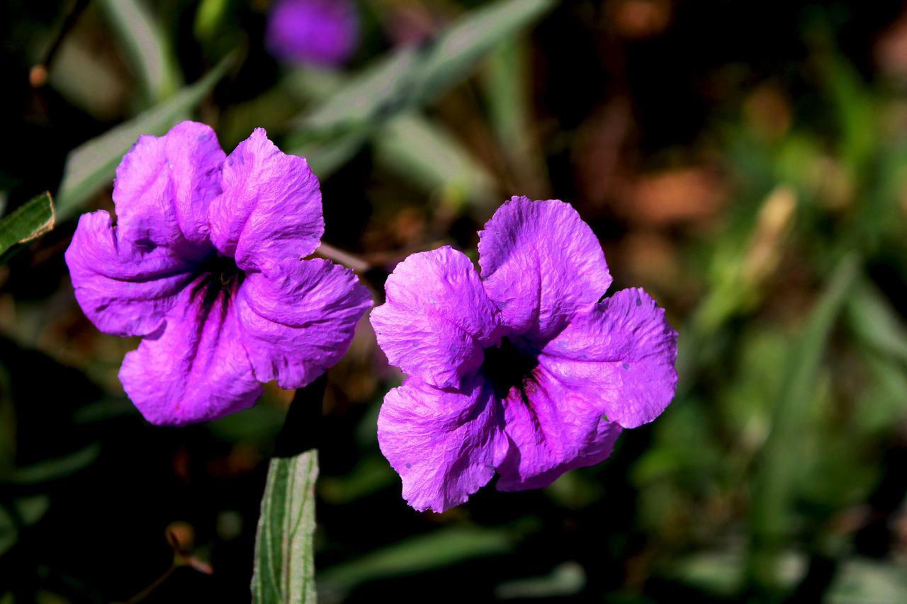 Relax Violet Violet Flower Flower Bouquet Beautiful Nature Green Green Leaf