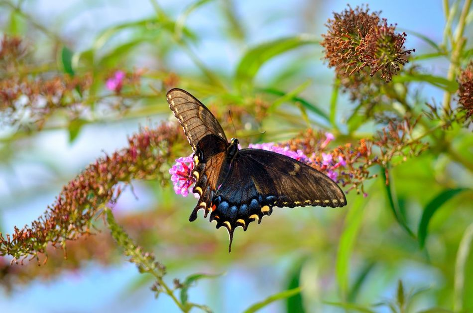 Beautiful stock photos of butterfly, Purple - Color, animal Themes, animal Wing, animals In The Wild