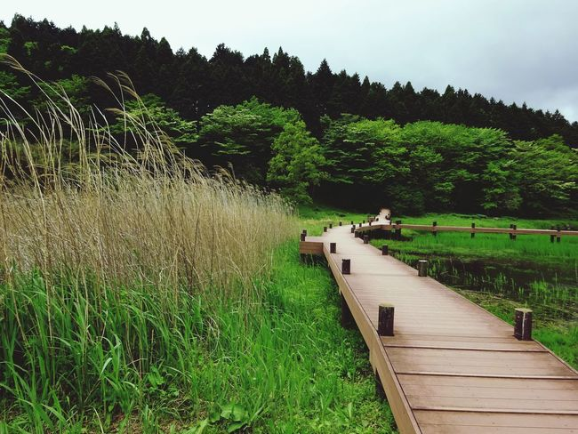 Nature Where Are You Going? Boardwalk Alone Peaceful Wind Through The Grasses Beppu Japan